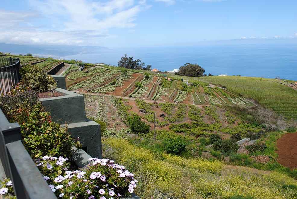 Bodegas Monje Winery, Tenerife, Canary Islands