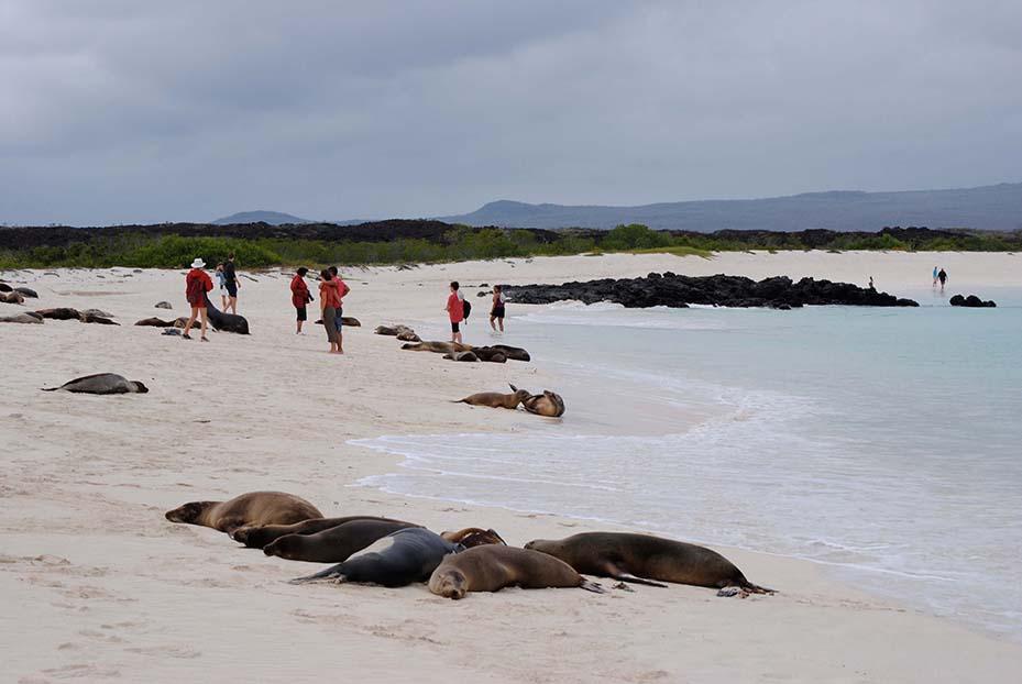 Gardner Bay Beach, Galapagos