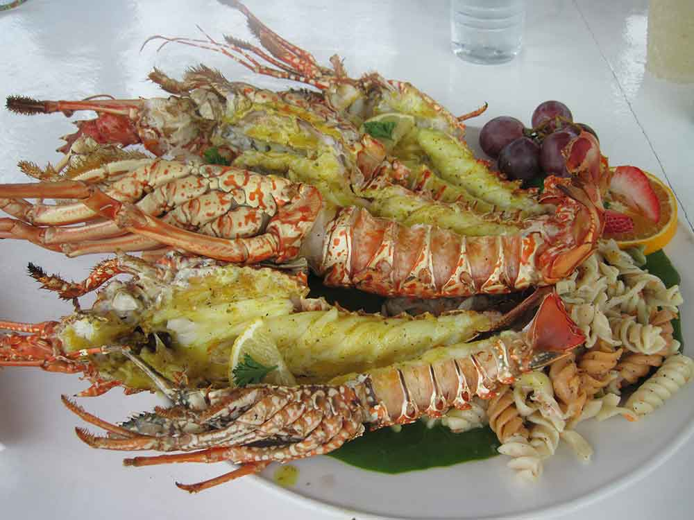 Caribbean lobster and Anguillian crayfish