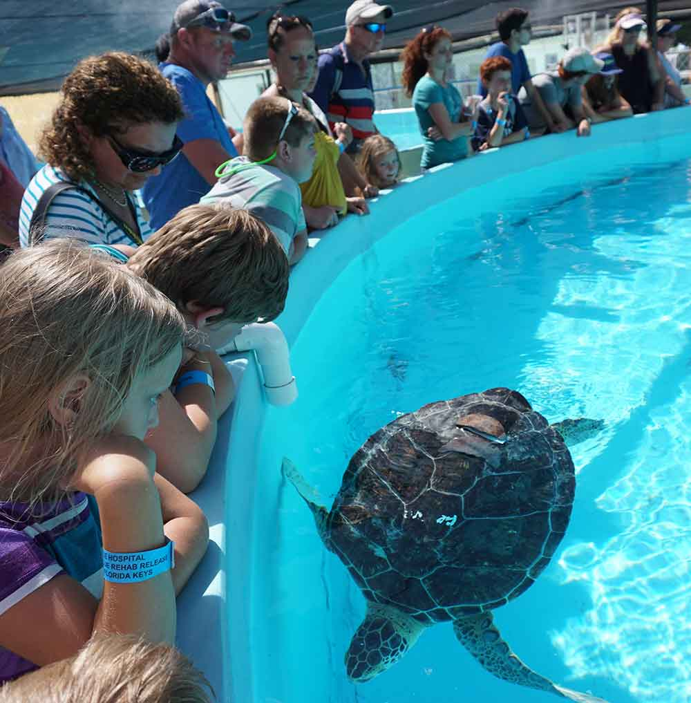 The Turtle Hospital, Marathon, Florida