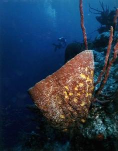 Barrel Sponge, San Salvador, Bahamas