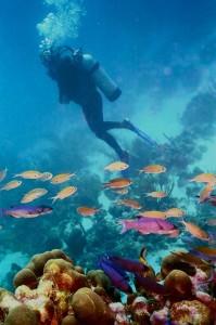 Diver with fish, San Salvador, Bahamas