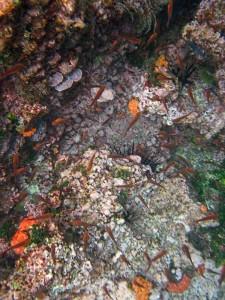 Snorkeling, Galapagos