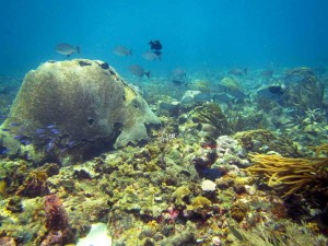 Cathedral Reef, Tobago