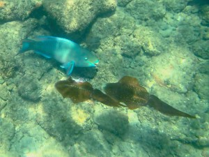 Snorkeling, Parrotfish and Reef Squid