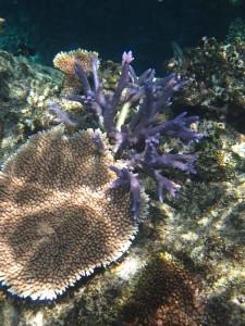 Snorkeling, Vomo Reef, Fiji
