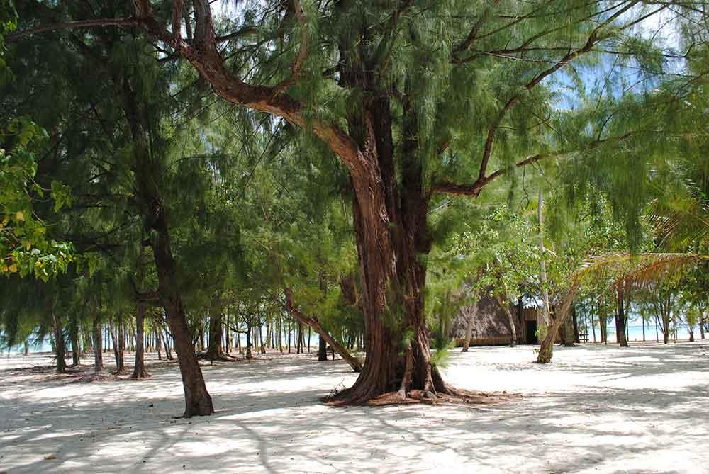 Trees on the interior of Motu Tapu