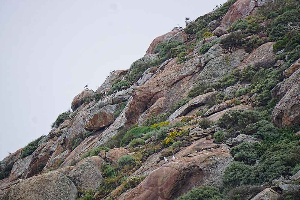 Morro Rock, birds perching and roosting