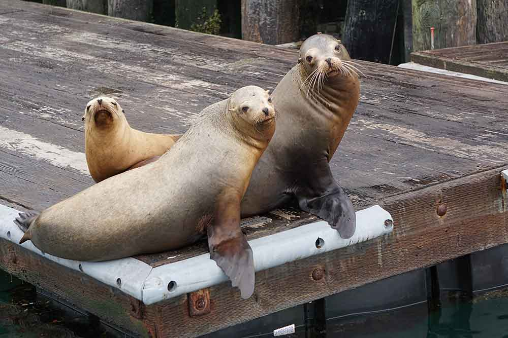 Sea lions on dock, Morro Bay, California
