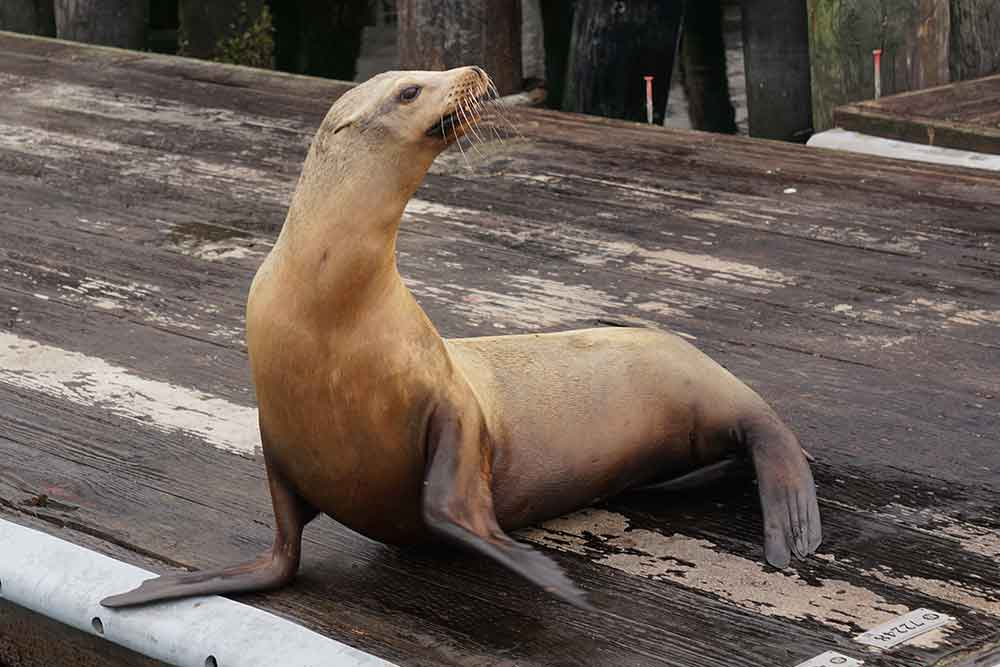 Young sea lion, Morro Bay, California