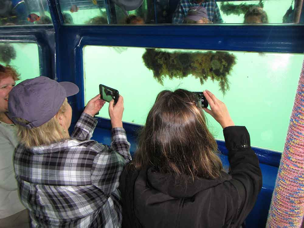 Underwater Viewing Room, Sub Sea Tours (Photo: Debbra Dunning Brouillette)