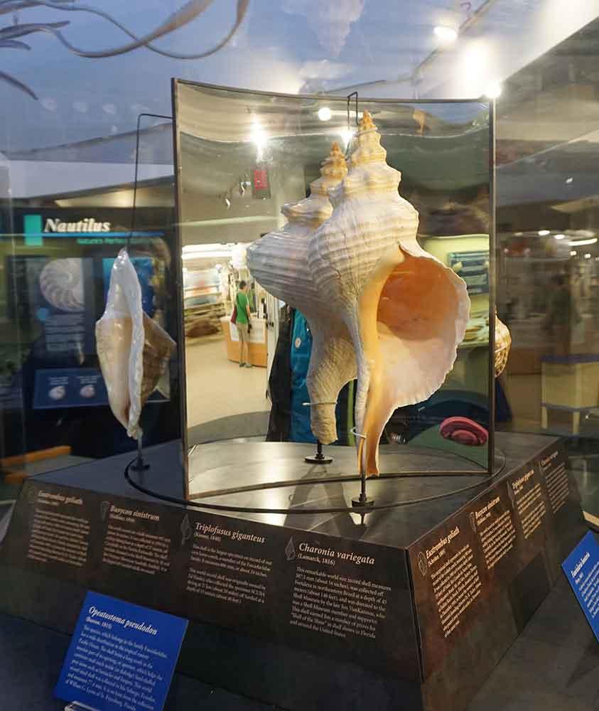 largest shells museum