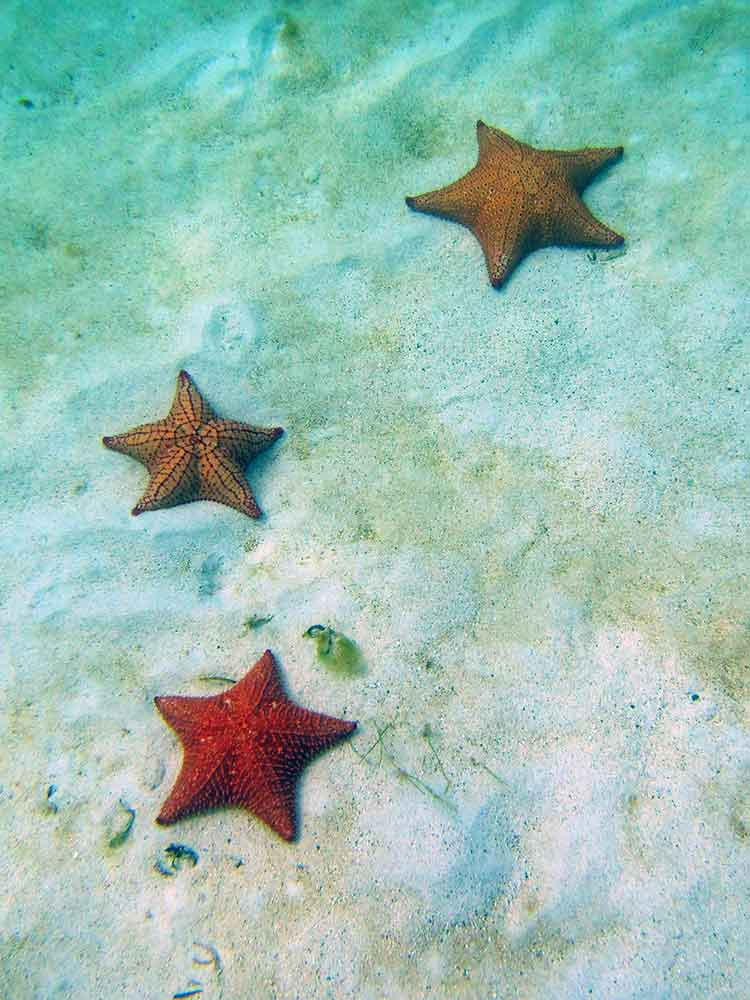 Sea Stars, Tobago Cays