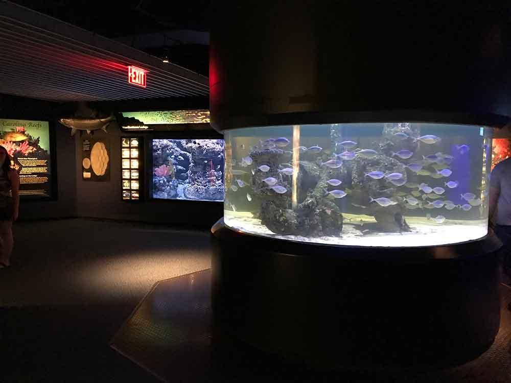 North Carolina Aquarium at Pine Knoll Shores cylinder tank scene