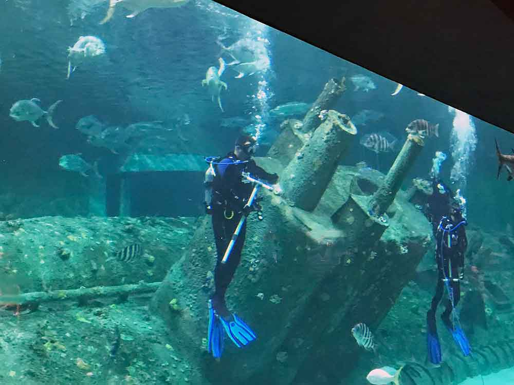 North Carolina Aquarium Living Shipwreck habitat with divers