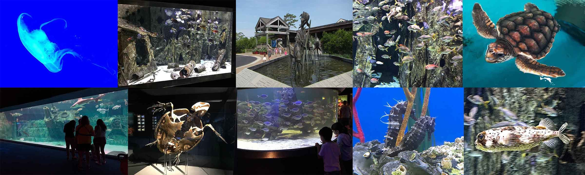 North Carolina Aquarium Banner
