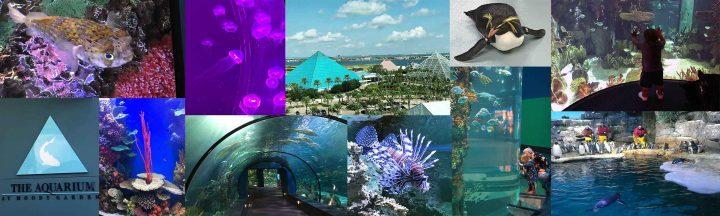Moody Aquarium Banner
