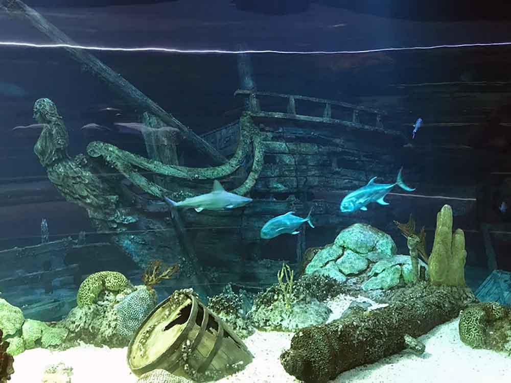 Sunken Ship For Aquarium 1000 Aquarium Ideas