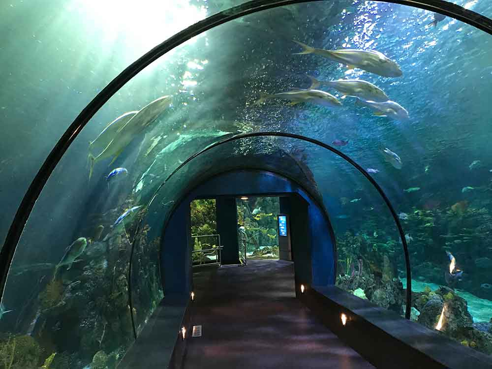 Indoor Oceans: The Aquarium at Moody Gardens, Galveston ...