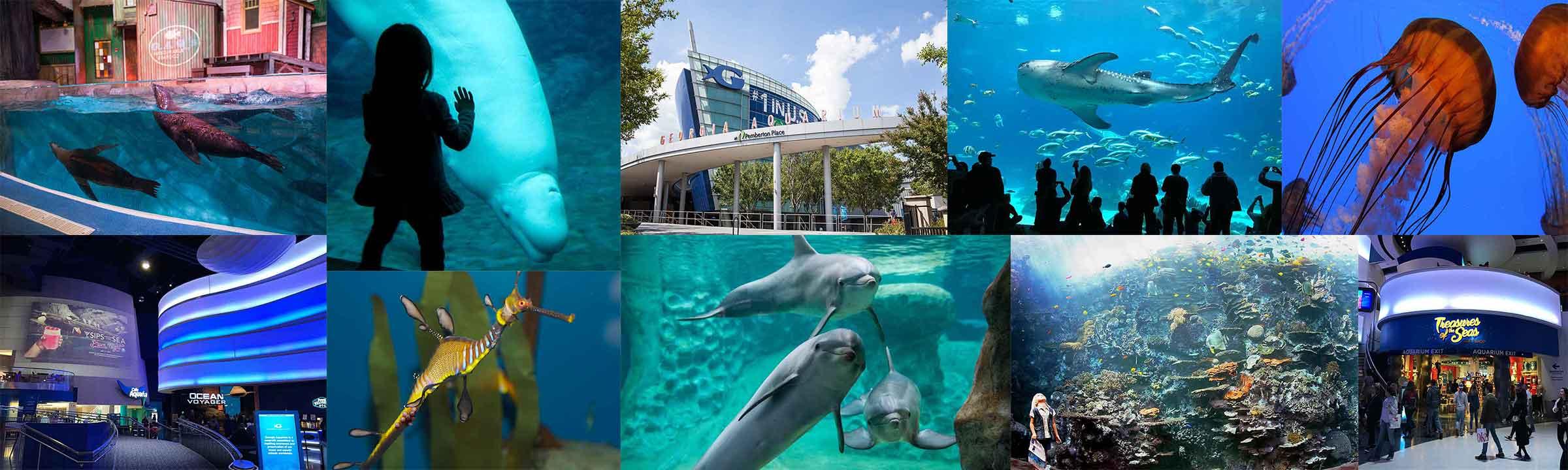 indoor oceans georgia aquarium is world s largest tropical travel