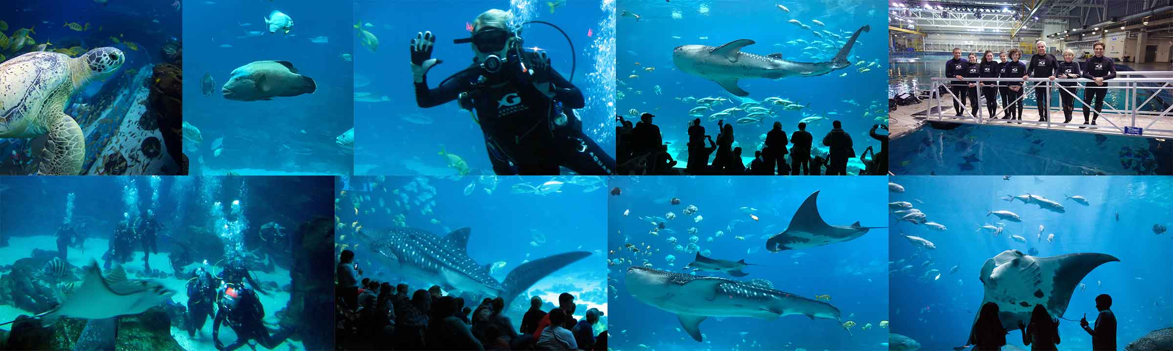 Indoor Oceans Diving With Whale Sharks At Georgia